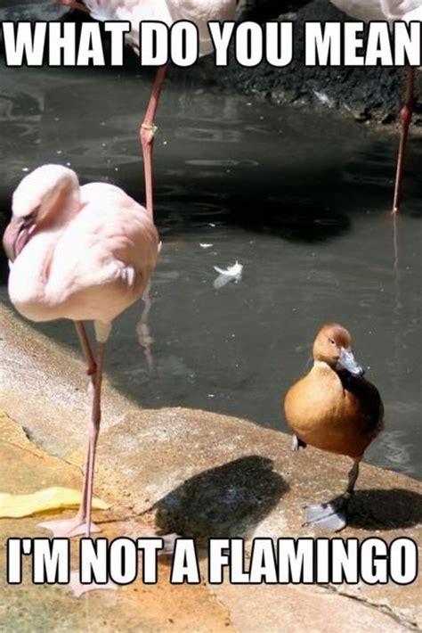 Memes Pics Funny - funny pics flamingos meme