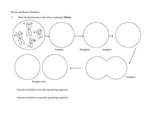 mitosis flowchart mitosis flowchart create a flowchart