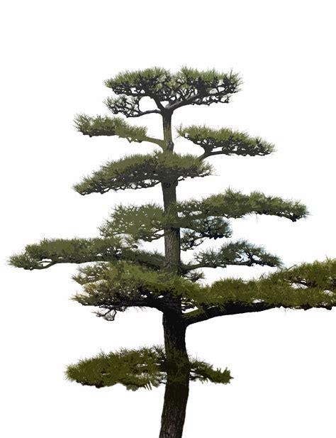 decorative pine trees ornamental pine tree 5364 stockarch free stock photos