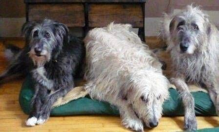 how to remove dog hair from comforter wool blanket blankets and how to remove on pinterest