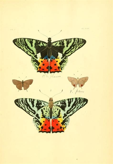 The Iron Butterfly Volume 1 by 1040 Best Iron Butterfly Images On Butterflies