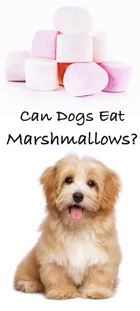 can dogs marshmallows can dogs eat marshmallows a food safety guide