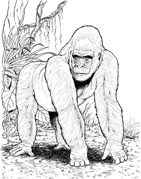 free coloring page of a gorilla free gorilla coloring pages