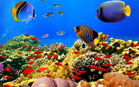 Wallpaper Animasi Hidup Android | wallpaper animasi 3d aquarium bergerak images