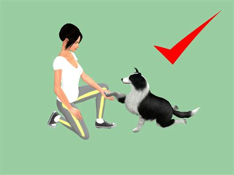 how to dogs to sit how to a to sit and shake 10 steps