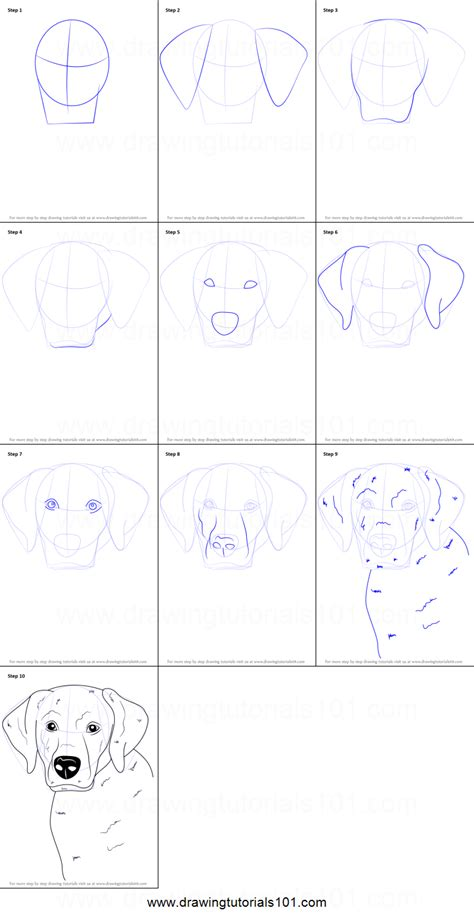 how to labrador in how to draw a labrador printable step by step drawing sheet drawingtutorials101