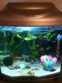 Beta Fish Plant Vase Choosing Plants For Your Betta Tank