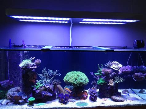 Reef Aquarium Lighting by Understanding Calcium And Alkalinity By Orphek