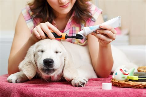 gingivitis in dogs toothy trouble periodontal disease in dogs