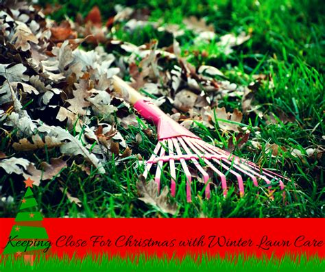 winter lawn care closer for with winter lawn care