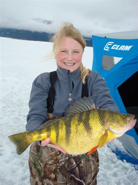 Idaho Records Idaho Ices World Record Perch In Fisherman