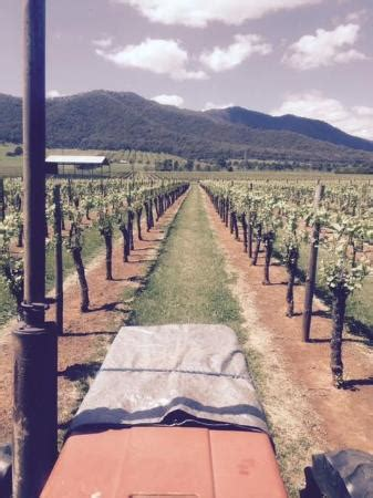 alpine ford cooma michelini wines myrtleford all you need to before