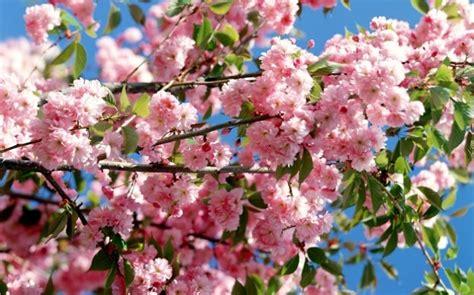 fiere fiori 2015 un soffio di primavera 2015 mostra floreale nel weekend