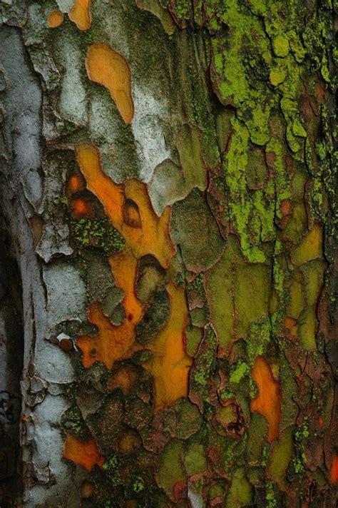 bark color bark orange green white brown trees wood