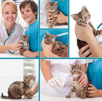 insufficienza renale alimentazione insufficienza renale gatto