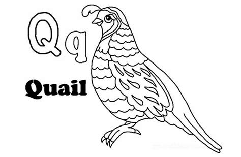 Free Coloring Page Quail by Quail Preschool Worksheet Quail Best Free Printable