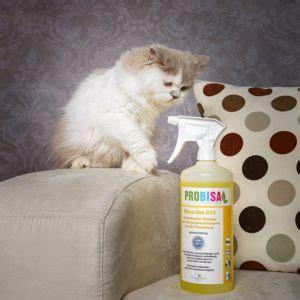 uringeruch aus teppich entfernen katzenurin aus dem teppich entfernen teppich reinigen