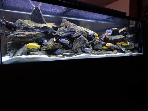 mbuna aquascape here is my tank 240 gallon with a lot of rocks and mbuna