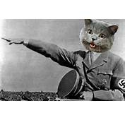 Nazi Cat Pictures To Pin On Pinterest