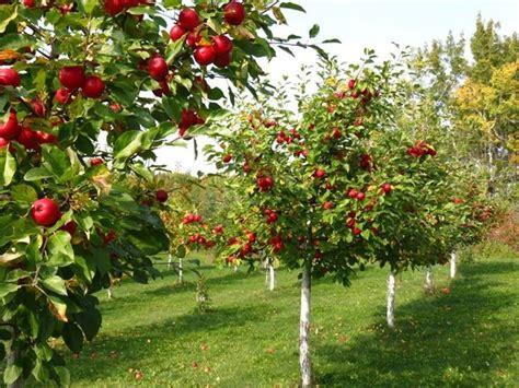 Small Fruit Trees For Home Garden Alberi Da Frutto Piante Da Frutto Alberi Che Fanno Frutti