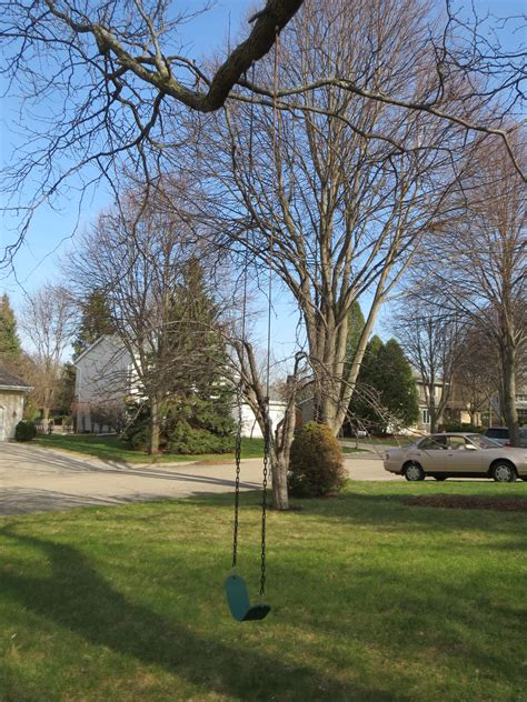 tall swing hanging a tree swing simplicitysoil