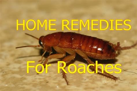 home remedies for cockroaches removal