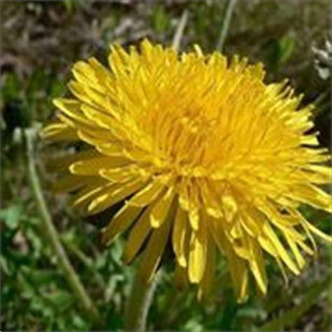 nomi di fiori primaverili fiori di co
