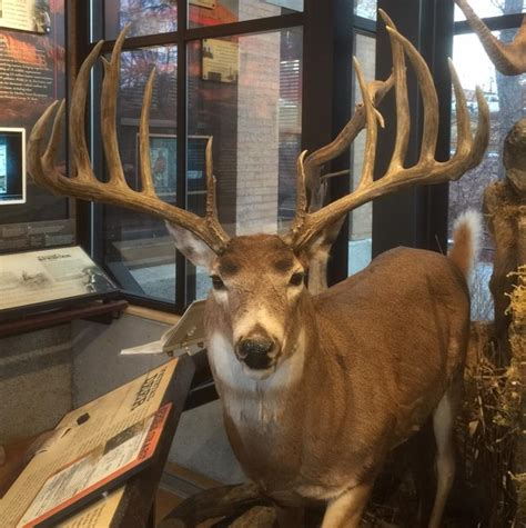 world record whitetail what it will take to top the