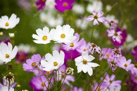 giardini bellissimi immagini bellissimi fiori in giardino paesaggio primaverile foto