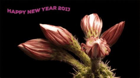 flower happy new year gif gif flower blooming blooming flower gif find this pin and more on gifs and animated