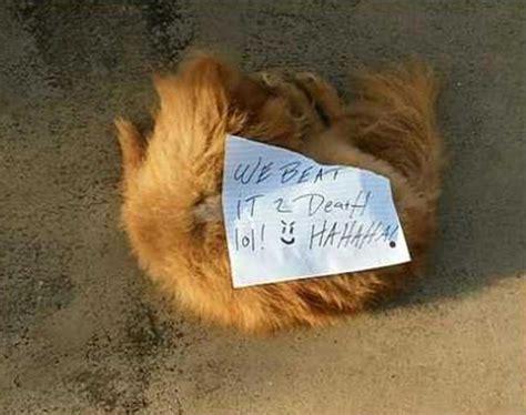 pomeranian beaten  death left  fla owners porch