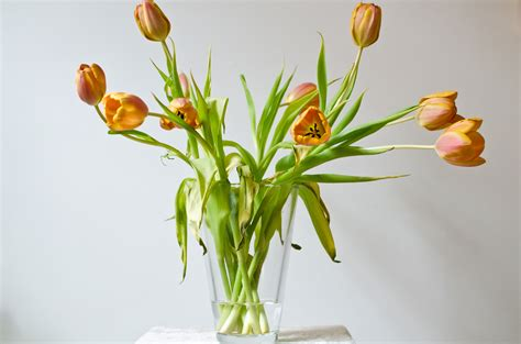Tulips Vase by File Vase Of Tulips Jpg
