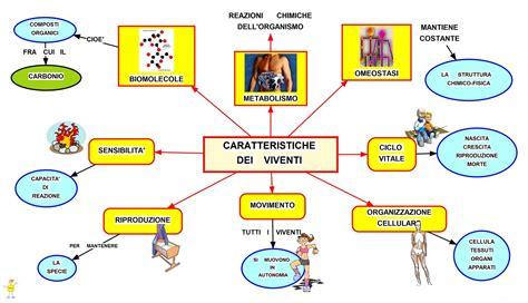 la catena alimentare spiegata ai bambini mappa concettuale caratteristiche dei viventi studentville