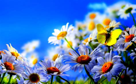 flower screensaver wallpaper free spring wallpaper and screensavers wallpapersafari