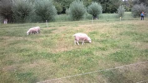Britzer Garten Wetter by Britzer Garten Im August Seelenzeit