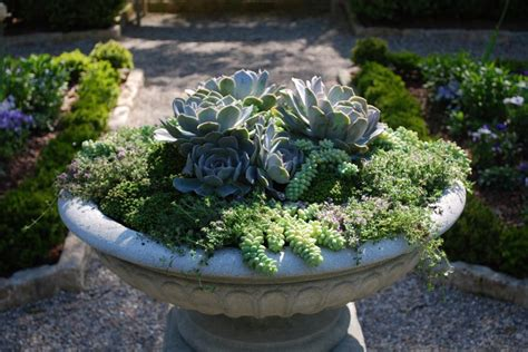 Plant Combinations For Containers Hgtv Plant Combination Ideas For Container Gardens