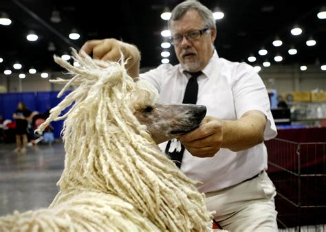 okc hair show dogs vie to give judges pause at okc summer classic dog