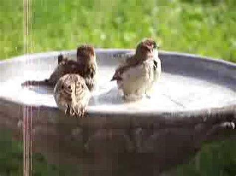 animalpicturegifts com birds in the bird bath youtube