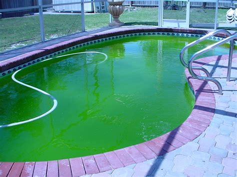 tips to getting rid of algae in your swimming pool diane