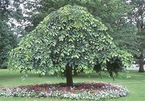 Orange Patio Umbrella Erica Enterprises Trees