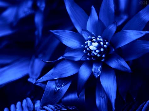 Blue Wedding Flowers Pictures by Types Of Blue Flower Names Pictures Blue Flowers For