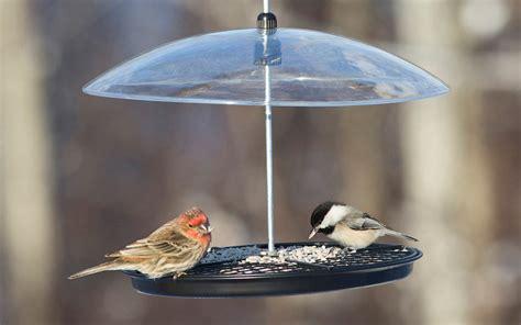 help birds survive in winter duncraft