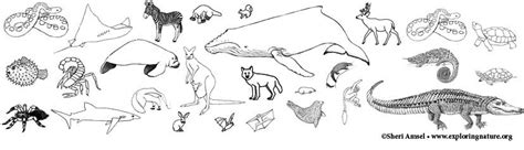 group of animals coloring page animal group coloring pages