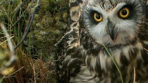 National Geographic Wildlife wildlife animals documentary scotland the western isles