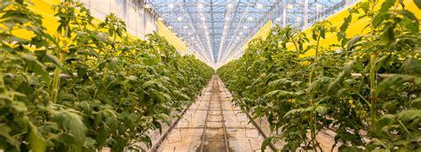 backyard farms llc our greenhouse 187 backyard farms