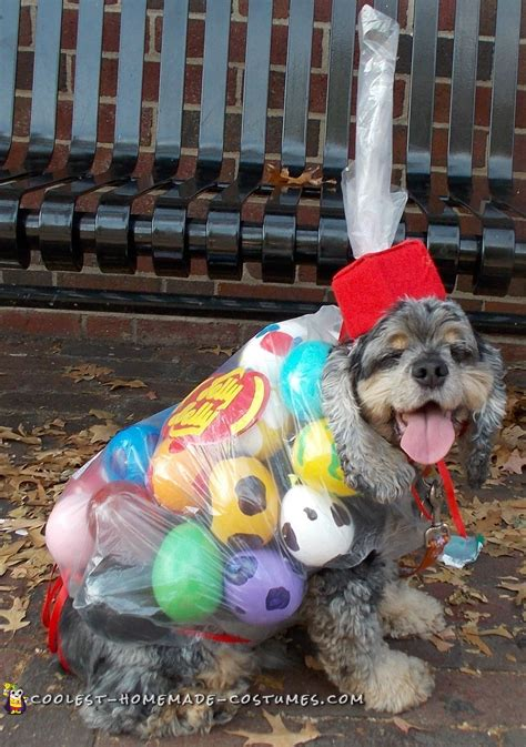 awesome bag  jelly belly beans diy dog costume