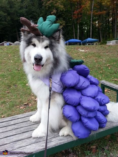 grapes for dogs 8 foods your desperately wants but shouldn t barkpost