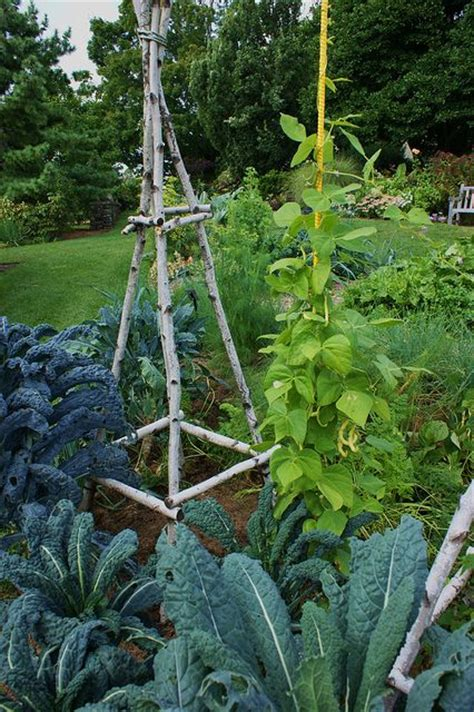 Trellis Vegetable Garden Garden Trellis Made From Branches From A Tree That Needed