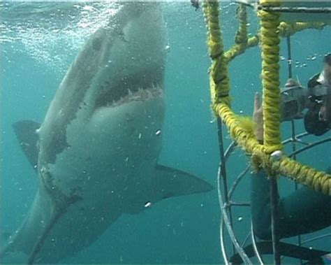 dive with sharks in south africa fly fighter jets more shark diving mossel bay garden route western cape south africa