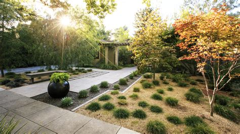how to landscape a dog friendly garden sunset landscaping without grass sunset